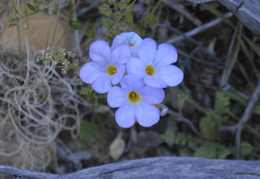 blooming in the desert