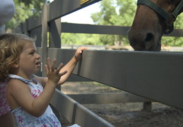 Ellie feeding the horses