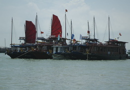 boats (with sails raised) in Ha Long Bay