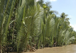 palms along the Meekong