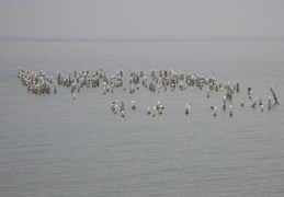 birds on Lake Michigan