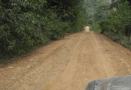 road through the jungle