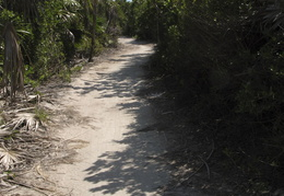pathway through the Southern Island