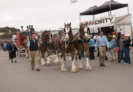 Budwiser Clydesdales