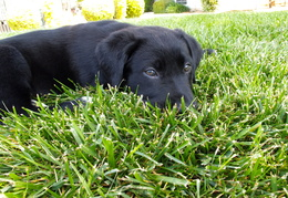 Dylan in the grass