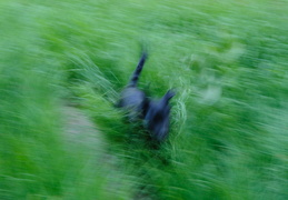 running in the grass