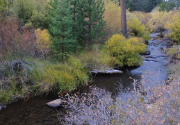 fall colors near Truckee