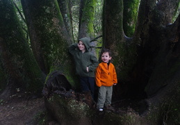 Jack and Owen in Muir Woods
