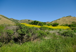 wildflowers in the hills